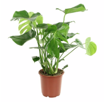 PLANT 1.png