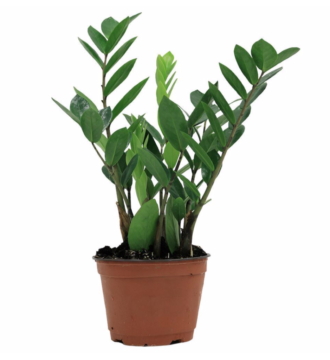 PLANT 2.png